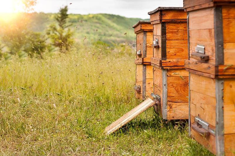 ruche abeilles en bois